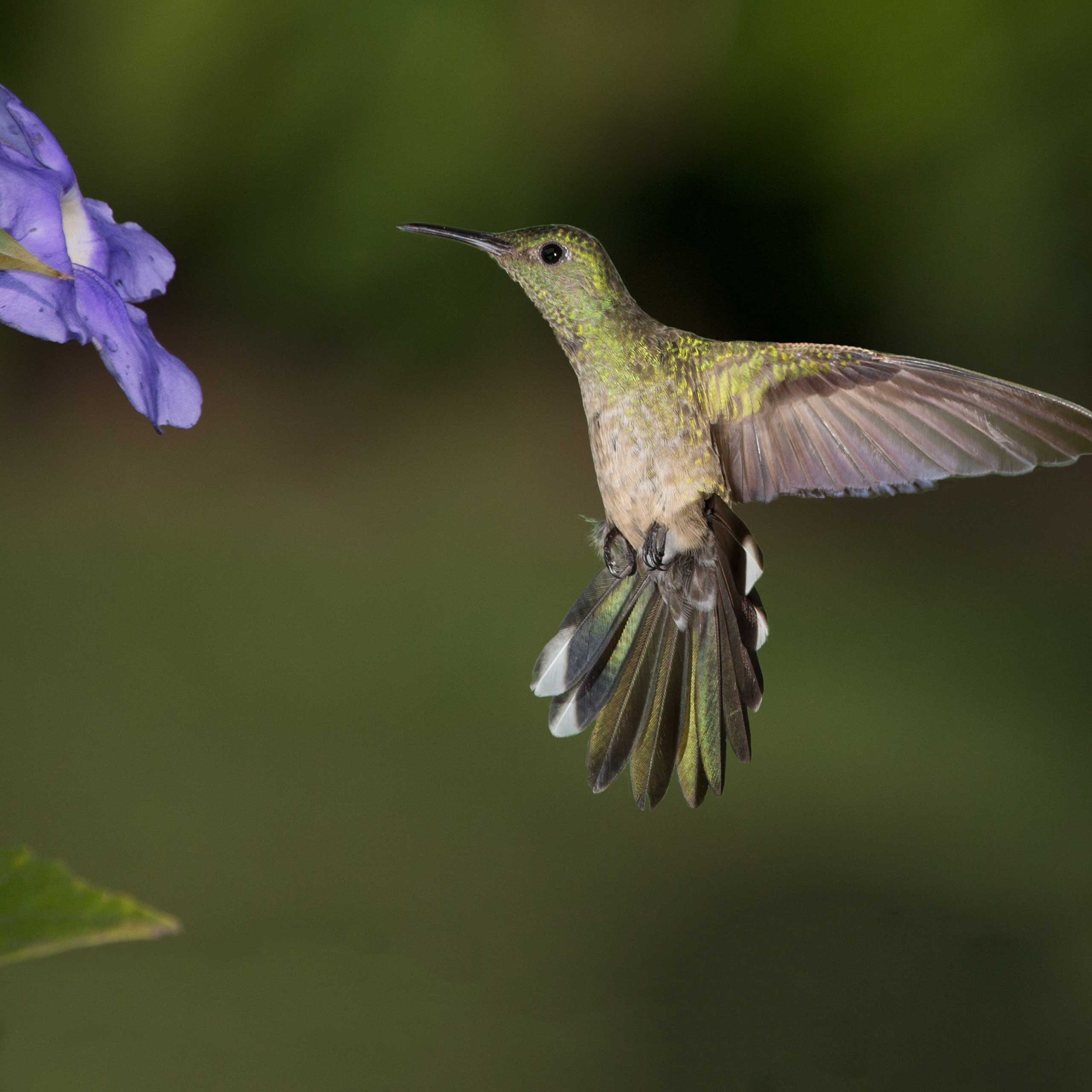 The hummingbird is a favorite of many Arizona residents. If he is one of yours, you won't want to miss the three-day Sedona Hummingbird Festival starting July 31st.