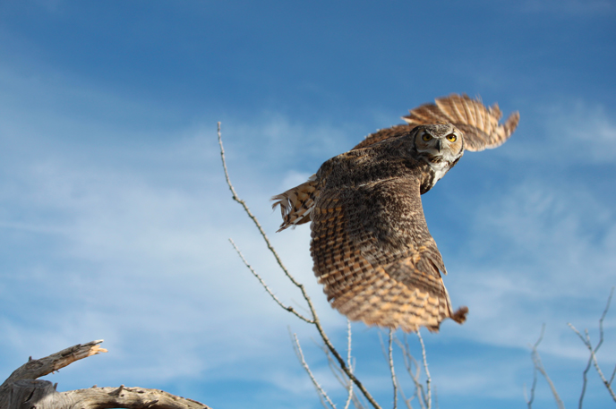 Visit Arizona Sonora Desert Museum in January to watch from the flight path as native birds of prey fly so close you can feel the brush of feathers.